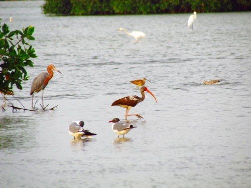 Cartagena  Colombia wild birds Cruise Excursion
