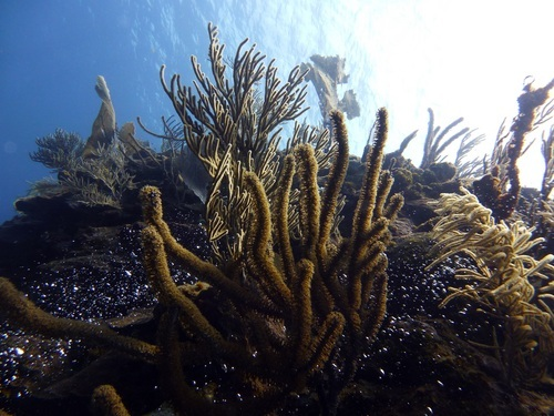 Roatan coral reef explorer Tour Reservations