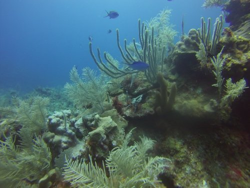 Roatan shipwreck Cruise Excursion Reservations