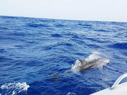 Cozumel  Mexico fishing Tour Reviews