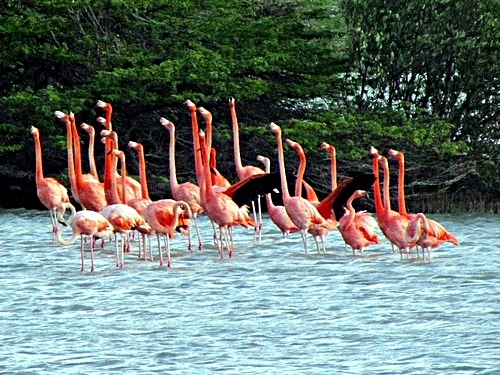 Curacao Willemstad flamingos Cruise Excursion Cost