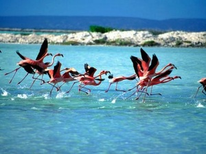 Bonaire Flamingo Salt Flats Excursion