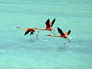 Bonaire Lac Bay National Park and Beach Safari Excursion