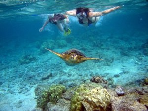 Bonaire Shore Snorkel Excursion at Plaza Beach Resort