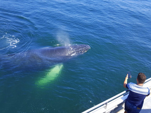 Boston Whale Watching Cruise Excursion
