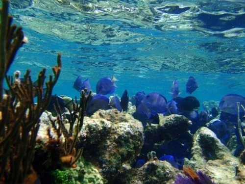 Grand Cayman  George Town Barrier reef Reservations