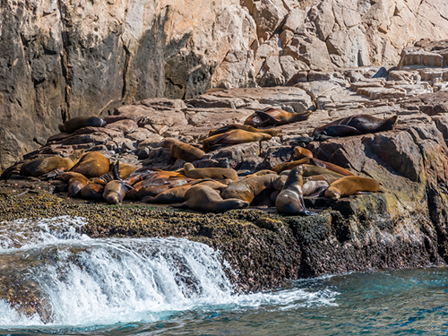 Cabo San Lucas Mexico Sea Lion Colony Sightseeing Excursion Reservations
