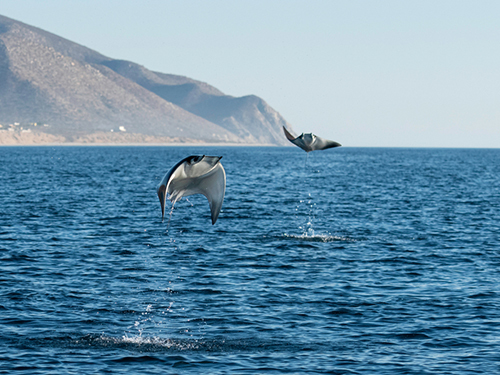 Cabo San Lucas Friends Whale Watching Cruise Excursion Reviews
