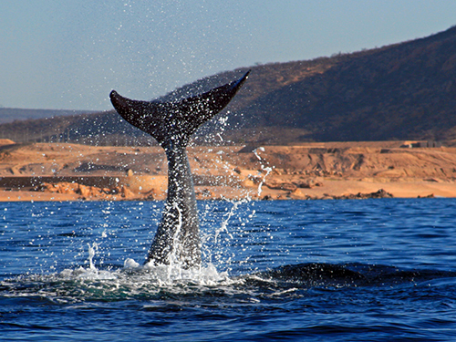 Cabo San Lucas Mexico Lovers Beach Sightseeing Tour Cost