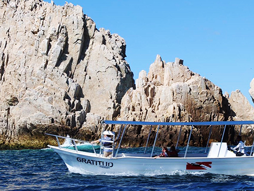 Cabo San Lucas Friends Whale Watching Trip Tickets