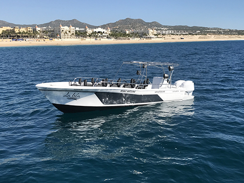 Cabo San Lucas Mexico Sea of Cortes Sightseeing Excursion Booking