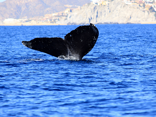Cabo San Lucas Sea of Cortes Sightseeing Excursion Tickets