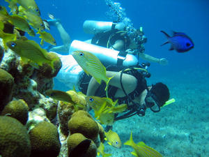 Cartagena Colombia Discover SCUBA Diving Excursion by Boat