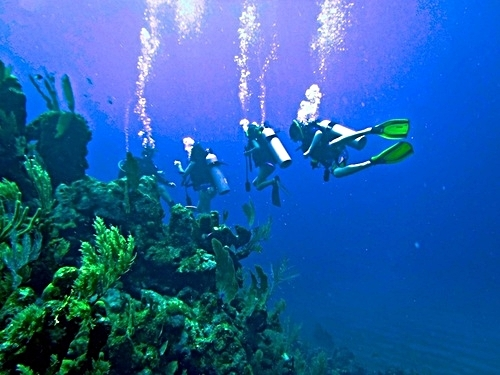 Roatan  Honduras Certified Dive Master Cruise Excursion Reservations