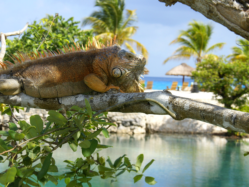 27 Best Playa del Carmen Excursions   72,000+ Shopper Reviews