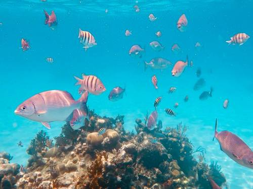 Roatan snorkeling by boat Reviews
