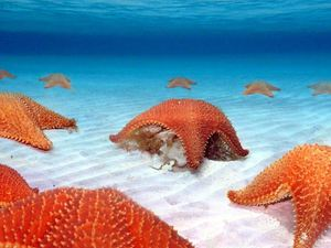 Colombia, Palancar Reef and Starfish Bay Snorkel Excursion in Cozumel