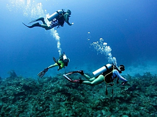 Roatan Beautiful coral reef and marine life Shore Excursion Reservations