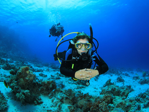 Costa Maya Certified 1 or 2 Tank SCUBA Diving Excursion
