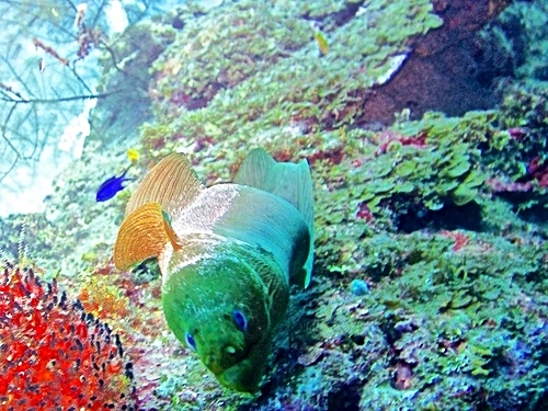 Roatan Certified Dive Master Cruise Excursion Reviews