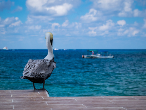 Cozumel Mexico Punta Morena Beach Shore Excursion Reservations