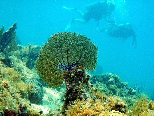 Cozumel guided SCUBA dive Shore Excursion Prices