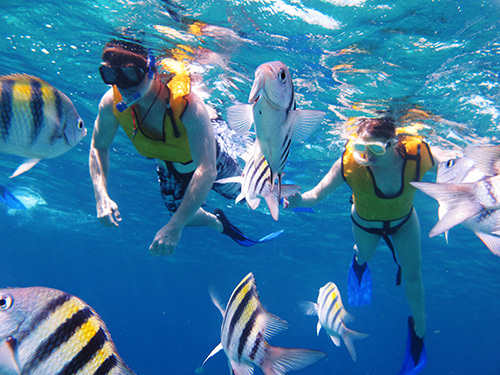 Cozumel Island Beach and Snorkel Day Pass Cruise Excursion Cost