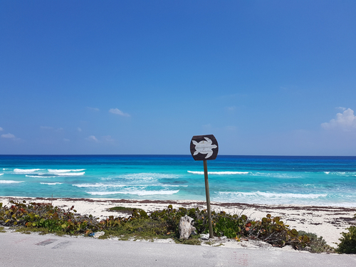 Cozumel  Mexico private jeep Tour Booking