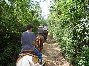 Cozumel Mayan Jungle Horseback Riding and Beach Break Excursion