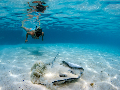 Cozumel Mexico Cozumel Snorkel Cruise Excursion Reviews