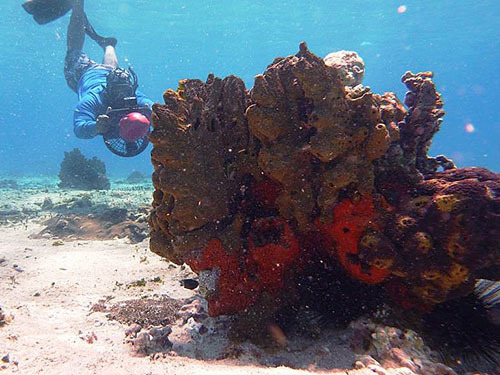 Cozumel Mexico Family  Shore Excursion Tickets