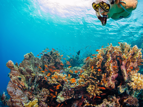 Cozumel Mexico two snorkel stops Cruise Excursion Cost