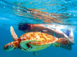 Cozumel Snorkel with Sea Turtles in Akumal and Famous Tulum Mayan Ruins Excursion