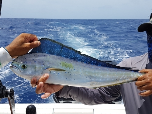 Cozumel fishing Cruise Excursion Cost