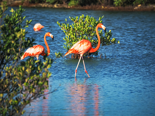 Curacao Willemstad Flamingo Area Cruise Excursion Cost