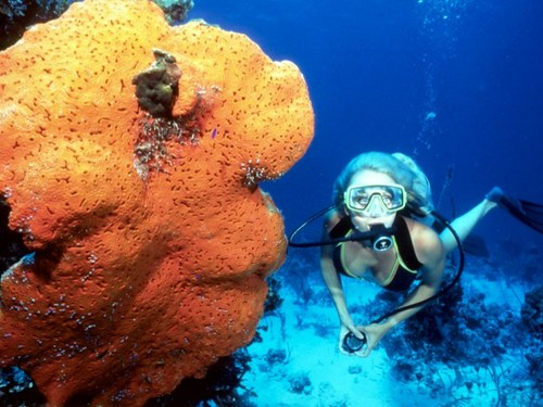 Nassau perfect for all divers Reservations