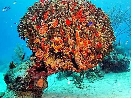 Roatan Beautiful coral reef and marine life Trip Prices