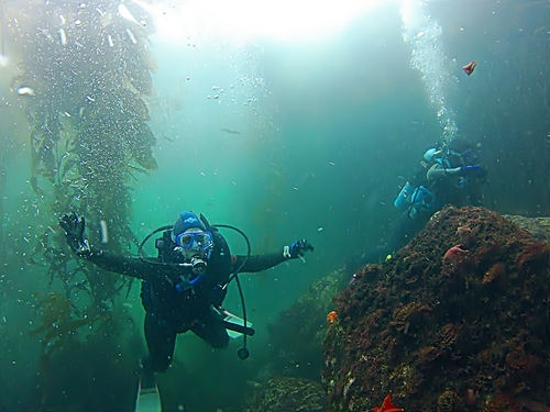 Ensenada colorful marine life Reservations