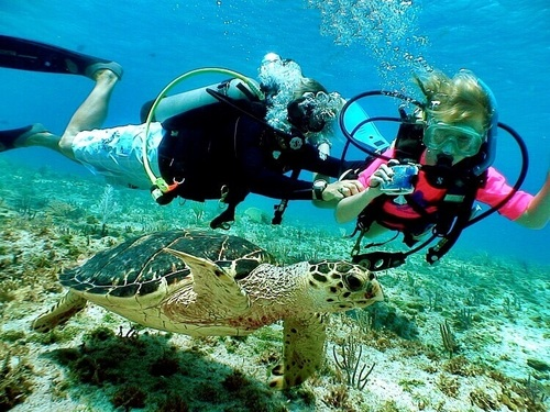Dominica Roseau scuba Shore Excursion Reservations