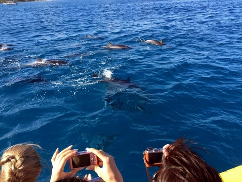 Oahu (Honolulu) snorkel with dolphins Trip Reviews