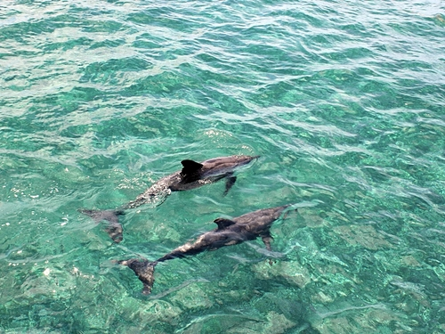 Roatan private excursion Reservations