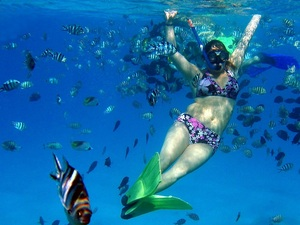 Dominica Champagne Reef Shore Snorkel Excursion