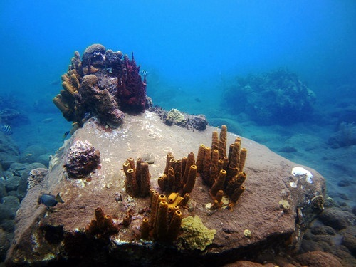 Dominica Champage Reef Excursion Prices