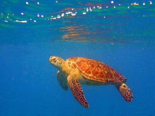 Key West Fury snorkel Excursion Cost