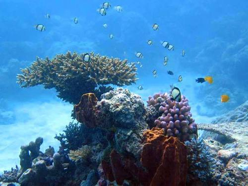 Dominica scuba Trip Tickets