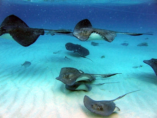 Grand Cayman coral reef snorkel Reservations
