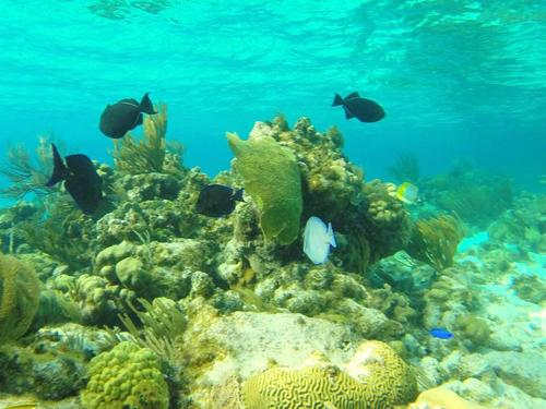 Grand Cayman George Town scuba Tour Reservations