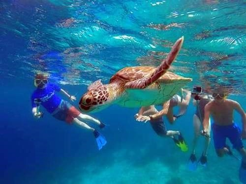 Bonaire sail and snorkel Excursion Cost