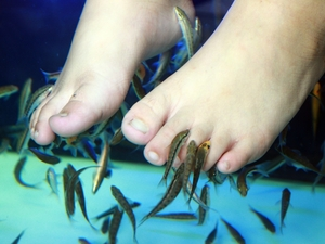Fish Spa Pedicure Experience at Mr. Sanchos in Cozumel