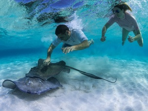 Grand Cayman Stingray Encounter, Coral Gardens and Starfish Snorkel Excursion